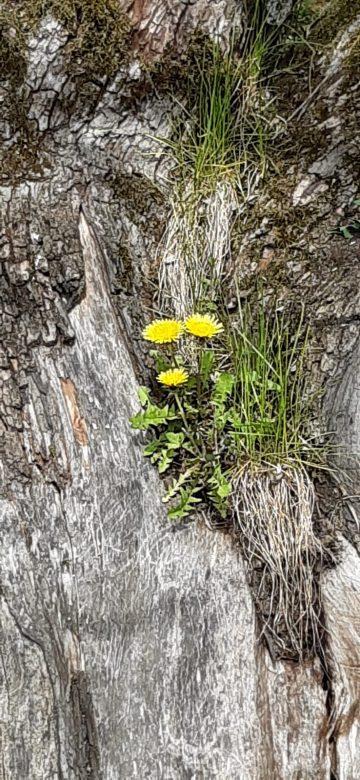 Frühlingbote_Detailansicht